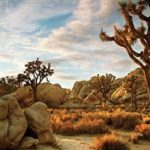 Joshua Tree & Palm Springs Winter Camp